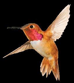 total-raised-bird